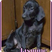 Adopt A Pet :: Jasmine - Ringwood, NJ