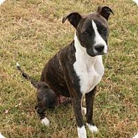 Adopt A Pet :: Annie - Winchester, TN