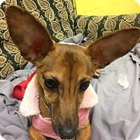 Adopt A Pet :: Rocket - Reisterstown, MD