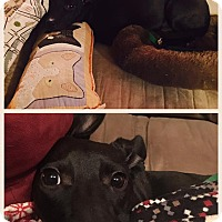 Adopt A Pet :: Bitsy - reduced and in Mass!! - Brattleboro, VT