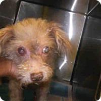 Adopt A Pet :: LEONARDO - Melbourne, FL
