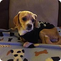 Adopt A Pet :: Hopper - Las Vegas, NV