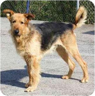 RJ~PENDING | Adopted Dog | RJ - PENDING | Toronto ...