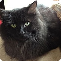 Adopt A Pet :: Tanya - Byron Center, MI