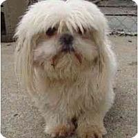 Adopt A Pet :: Snowman - Staunton, VA