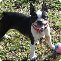 Adopt A Pet :: Rebecca - Mooy, AL