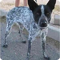 Adopt A Pet :: Kenzie - Phoenix, AZ