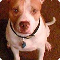 Adopt A Pet :: Max - Gilbert, AZ