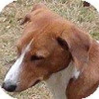 Adopt A Pet :: Prairie - Hamilton, ON