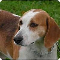 Adopt A Pet :: Judy - Rigaud, QC