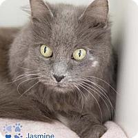 Adopt A Pet :: Jasmine - Merrifield, VA