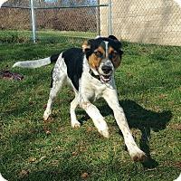 Adopt A Pet :: Daisy June- SPONSORED - Lisbon, OH