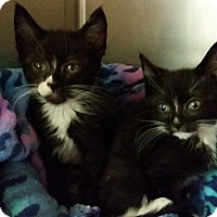 Adopt A Pet :: Chip and Dale - Modesto, CA