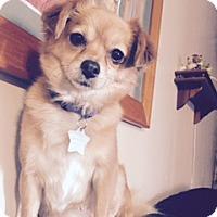 Adopt A Pet :: COCO - Rancho Cucamonga, CA