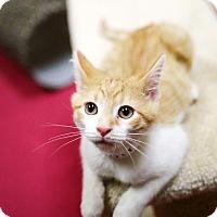 Adopt A Pet :: Alvin - Appleton, WI