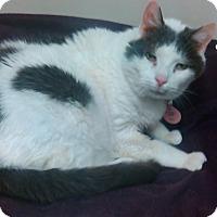 Adopt A Pet :: Grandpa - Muskegon, MI