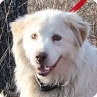 Adopt A Pet :: Besler - Baltimore, MD
