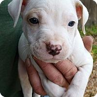 Adopt A Pet :: Driver - Gainesville, FL