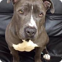 Adopt A Pet :: Mikey - Marina del Rey, CA