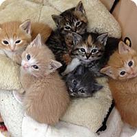 Adopt A Pet :: SIX PACK - Lakewood, CA