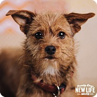 Adopt A Pet :: Nellie - Portland, OR