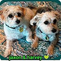 Adopt A Pet :: Jaxon & Harvey - Gettysburg, PA