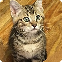 Adopt A Pet :: Fenway - Marietta, GA