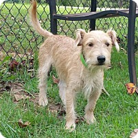 Terrier (Unknown Type, Medium) Mix Dog for adoption in Temple, Georgia - Peanut