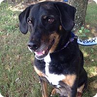 Adopt A Pet :: Jake - Sinking Spring, PA