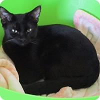 Adopt A Pet :: Blake - Burgaw, NC