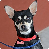 Adopt A Pet :: Bella - Idaho Falls, ID