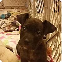 Adopt A Pet :: Pixel - Von Ormy, TX