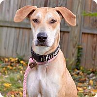 Adopt A Pet :: Bonnie - Bedminster, NJ
