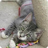 Adopt A Pet :: Igor - Hawthorne, CA