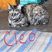 Adopt A Pet :: Cleo - Jesup, GA
