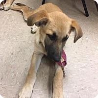 Adopt A Pet :: Totes - adopted - Decatur, GA