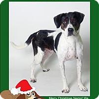 Adopt A Pet :: Frank - Columbus, OH