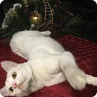 Adopt A Pet :: Lulu - Fayetteville, GA