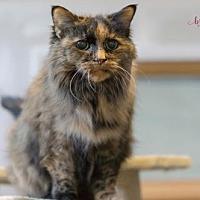 Adopt A Pet :: Sage - Stroudsburg, PA