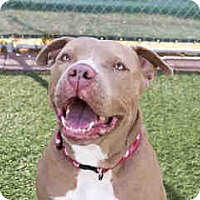 Adopt A Pet :: Mango - Agoura, CA