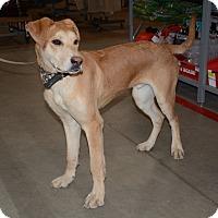 Adopt A Pet :: Marley - Hopkinsville, KY