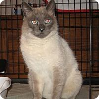 Adopt A Pet :: Sebastian - Galloway, NJ