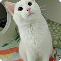 Adopt A Pet :: Jon Snow - Elmsford, NY