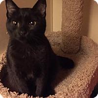 Adopt A Pet :: Niles - Glendale, AZ