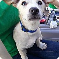 Adopt A Pet :: Porky - Phoenix, AZ