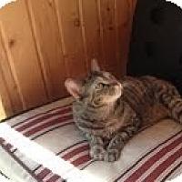 Adopt A Pet :: Kudzie - West Dundee, IL