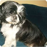 Adopt A Pet :: Daniel - Mooy, AL