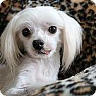 Adopt A Pet :: Nico