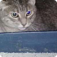 Adopt A Pet :: Sammy - Cleveland, OH