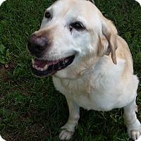 Adopt A Pet :: Jessa - Franklin, NH